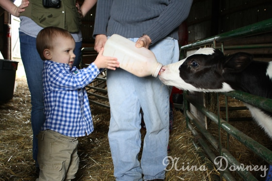 Feed baby cow