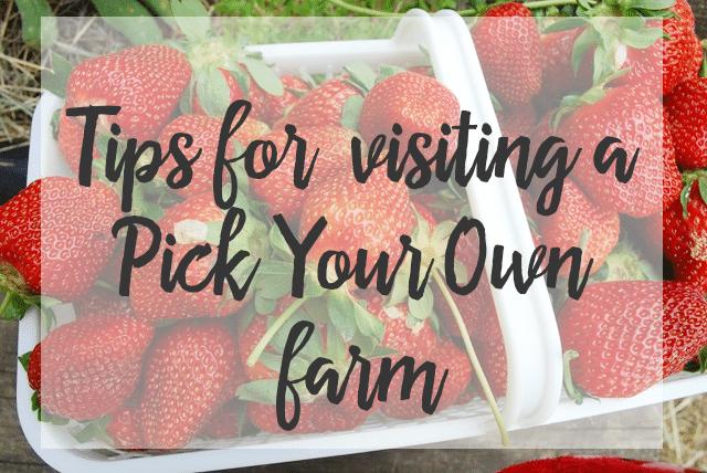Strawberry picking horizontal