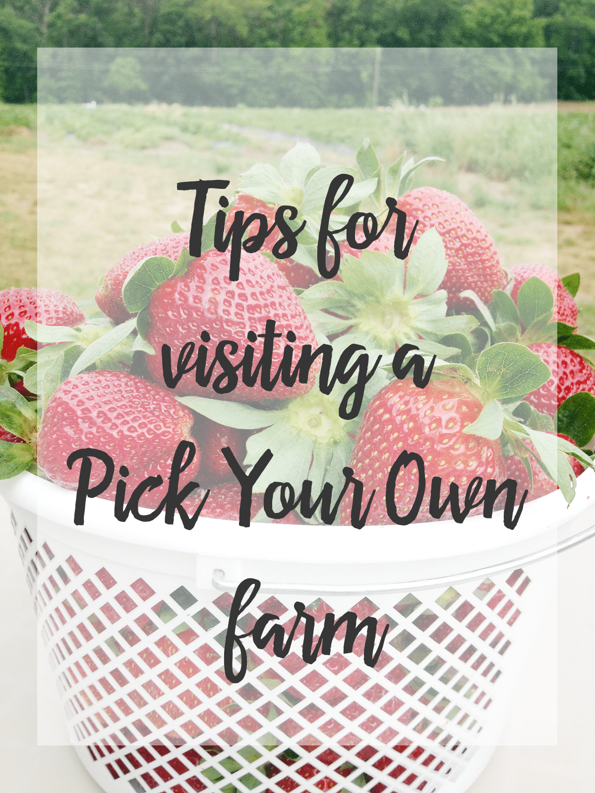 Tips for visiting a pick your own farm