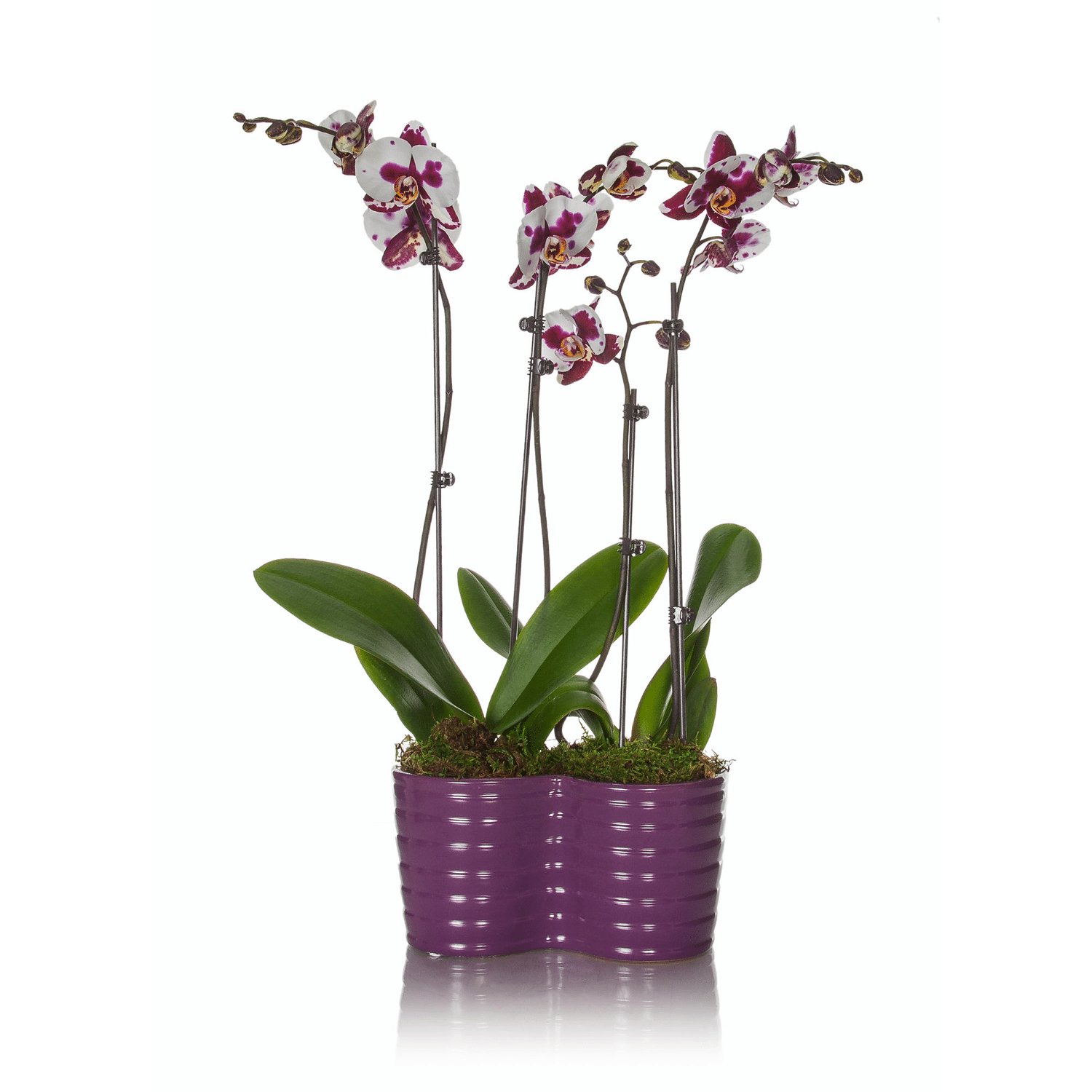 orchid.png