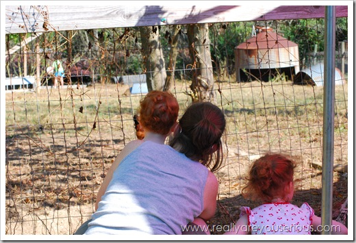 Mommy and Me Monday at the petting zoo