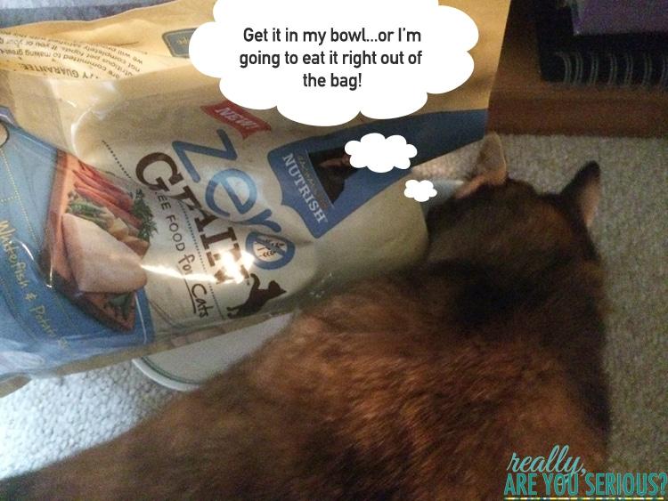 Rachael Ray Zero Grain Cat Food Coupon