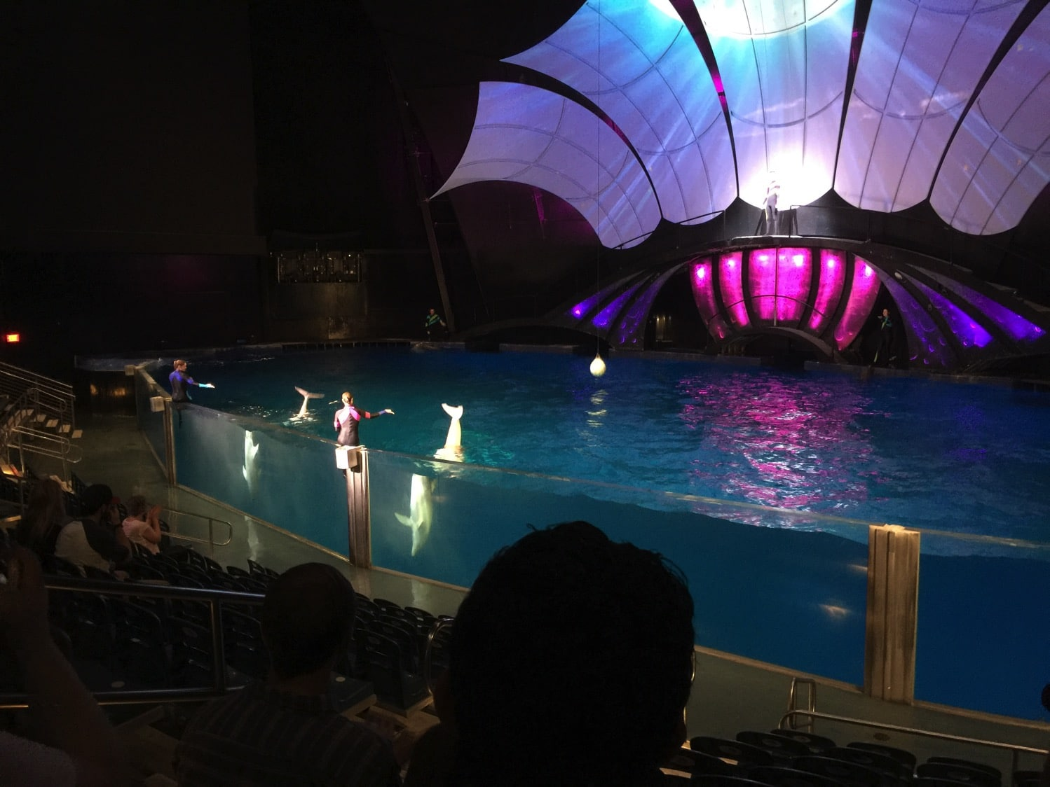 New dolphin show at the Georgia Aquarium