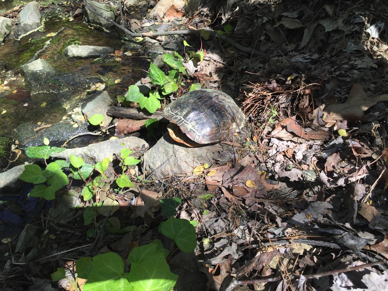 The turtle rescue