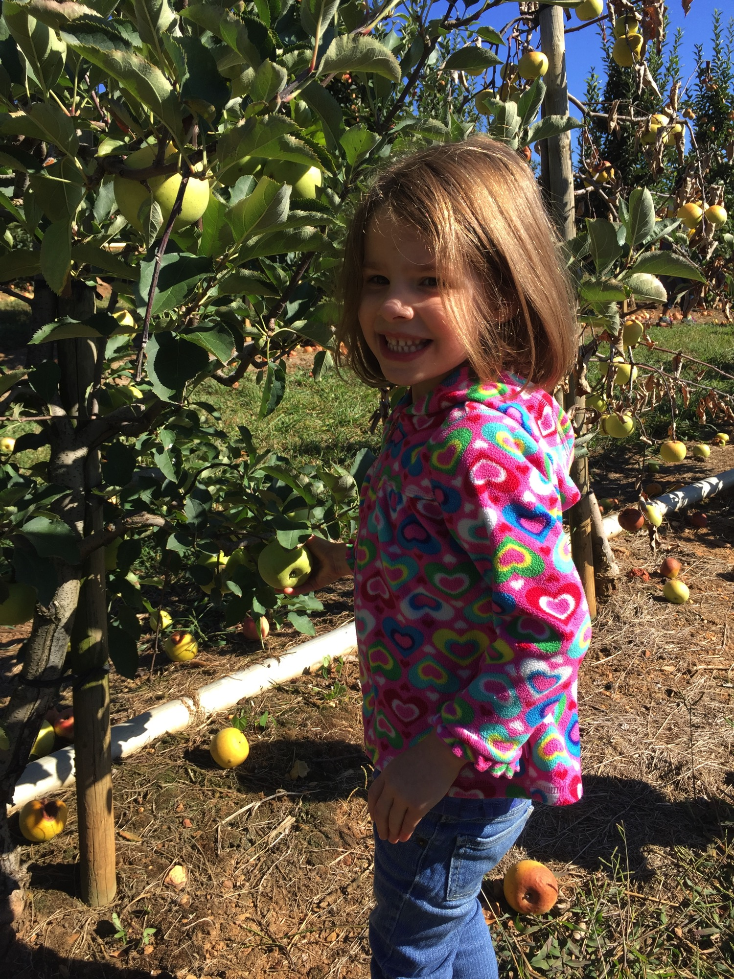 It 39 s apple picking time mommy and me monday 346th ed for Where can i go apple picking near me