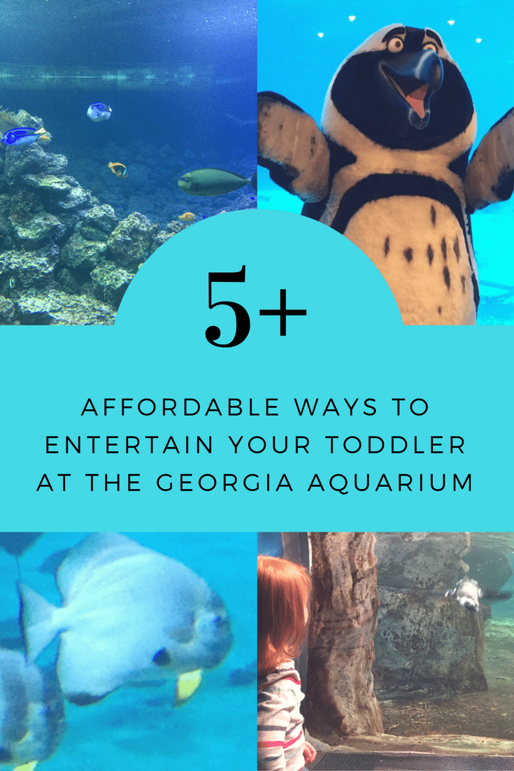5+ Affordable Ways To Entertain Your Toddler During Your Visit to the Aquarium