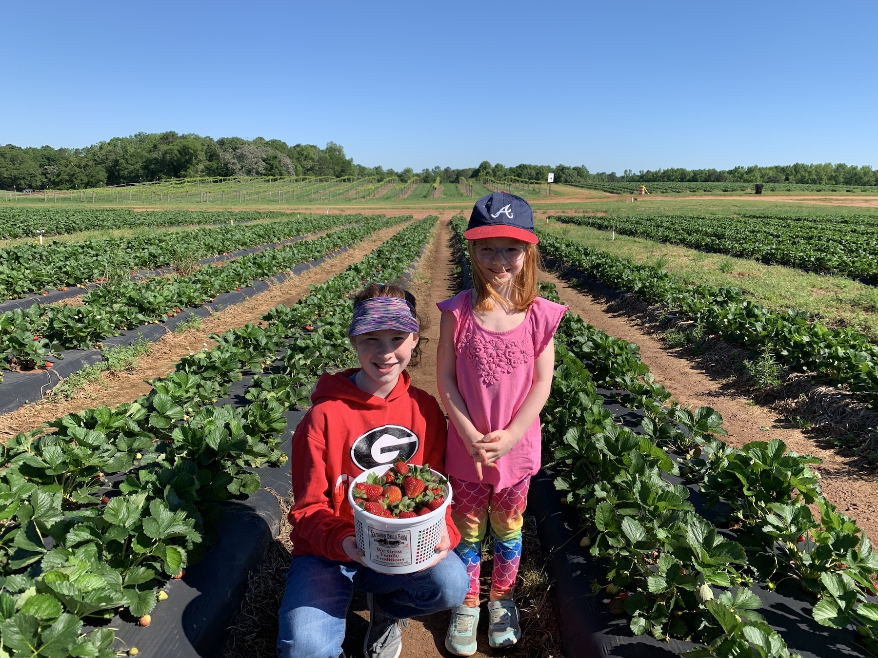 evensies strawberry picking